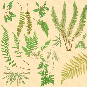 Fern Botanical ~ Parchment  ~ Large