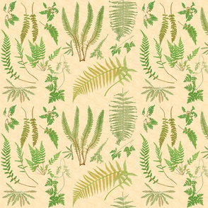 Fern Botanical ~ Parchment  ~ Medium