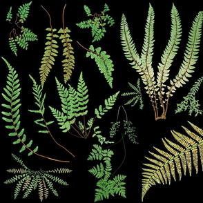 Fern Botanical ~ Black
