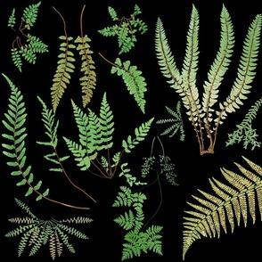 Fern Botanical ~ Black