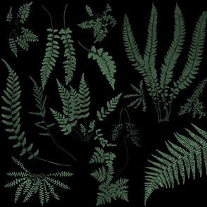Fern Botanical ~ Nightshade