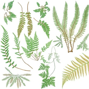 Fern Botanical ~ White