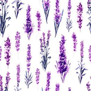 Provence Lavender Field in Watercolor