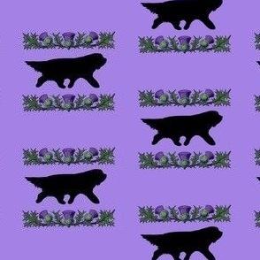 Beardie in Silhouette with Thistles Purple