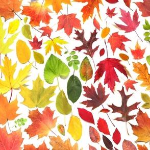 Fallen Autumn Rainbow