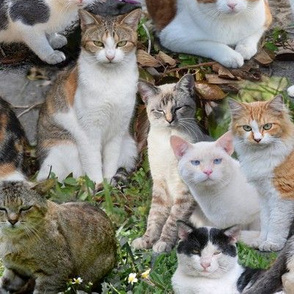 Calico Cats and Beyond Montage 24 inch