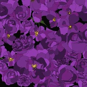 Roses - purple on black