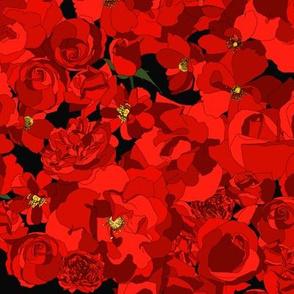 Roses - poppy red on black