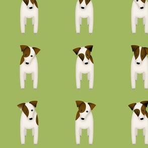 Parson / Jack Russell Terriers w cute doggy head tilt / Green