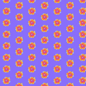 hibiscus blue-ed