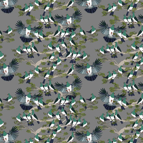 Kereru on grey