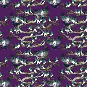 Kereru on purple