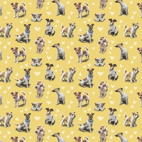 Jack Russell Terrier Yellow