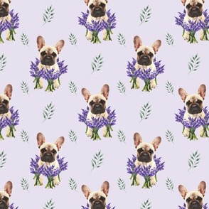 French bulldog and lavender