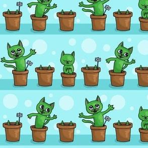 Growing cat plants - arctic blue