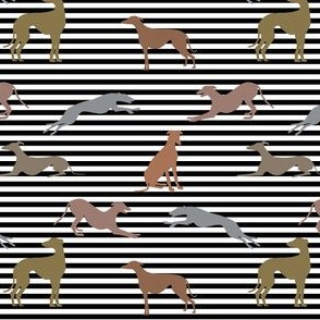 greyt_greyhound_metallic shades on stripes