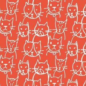 Here Kitty Kitty Tomato