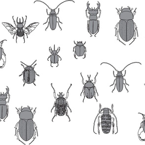beetles black and grey on white