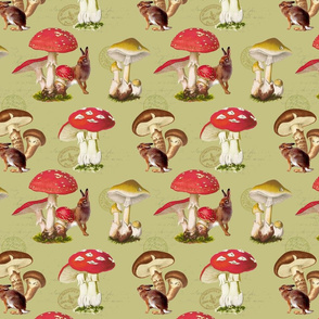 Mushroom Meadows