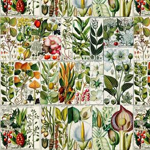 Charted Botanicals No.3