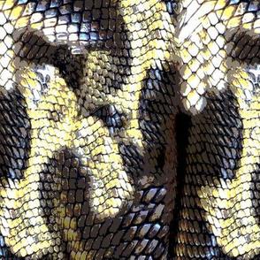 19-09s Snakeskin Animal Snake Modern Brown Cream Yellow