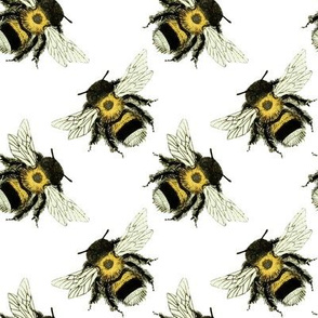 Bumble Bee Basics: White