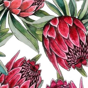 watercolor protea flowers on white