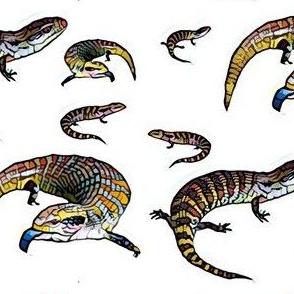 Bluetongue Lizards on white