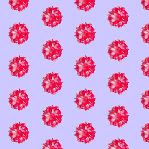 Rhododendron Polka Dots
