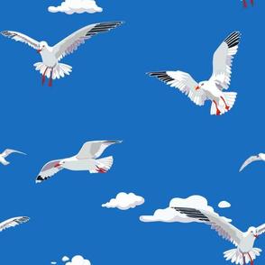 Seagull Clouds Blue