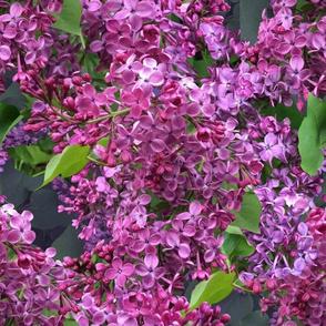 Among The Lilacs - Diagonal
