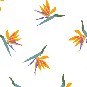 bird of paradise scatter-large
