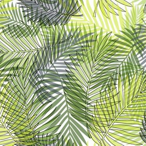 Tropical Leaves and Summer Foliage
