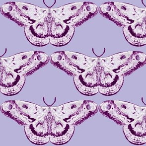 Plumberry Mystic Moth on Pale Lavender
