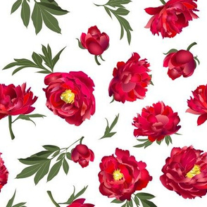red peonies on white