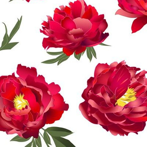 red peonies on white - large scale
