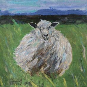 Big fat woolly Scottish sheep