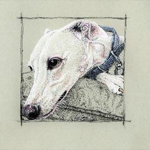 Whippet/Greyhound  Hugo3 (lighter)