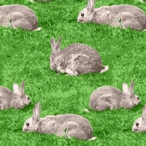 08869497 © rabbit rabbit rabbit