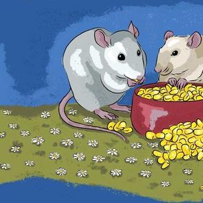 Fancy pet rats munching on corn