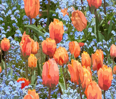 Paint by Number Tulips n Forget me Nots