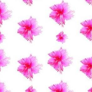 Apple Blossom Cluster
