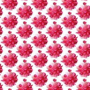 Hot Hot Pink Hibiscus