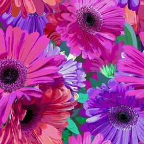 jumbo Gerber Daisy Garden