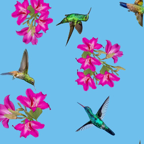 Bauhinia and birds - Caribbean blue