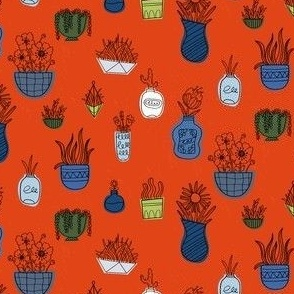 Potted Plants and Succulents in Orange