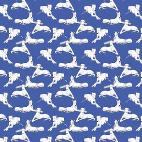 White Greyhounds/Galgos