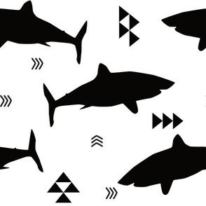 black shark attack