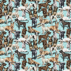 The Crossbreed Dog
