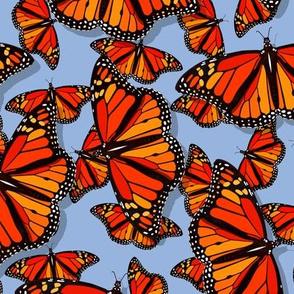 Lots of Monarch Butterflies on periwinkle blue